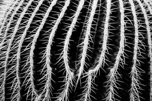 kaktus-f19f3cc3-59ca-4484-aaf7-64f0efc44d36